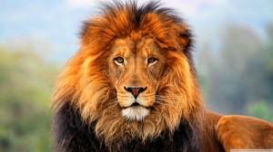 http://dealbreaker.com/uploads/2013/03/Lion.jpg